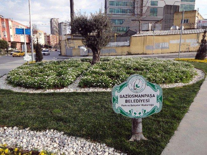 İlkbaharın Müjdecisi Çiçekler Gaziosmanpaşa'yı Süslüyor