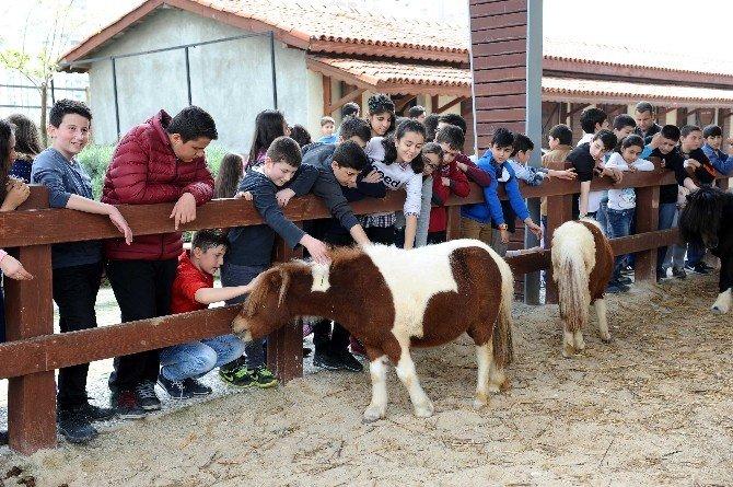 'Elim Sende' İle Hayvan Haklarını Öğrendiler