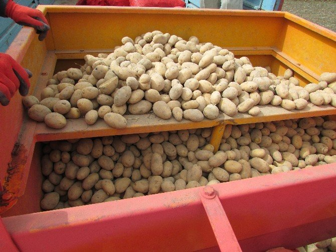 Sandıklı'da Patates Ekimi Başladı