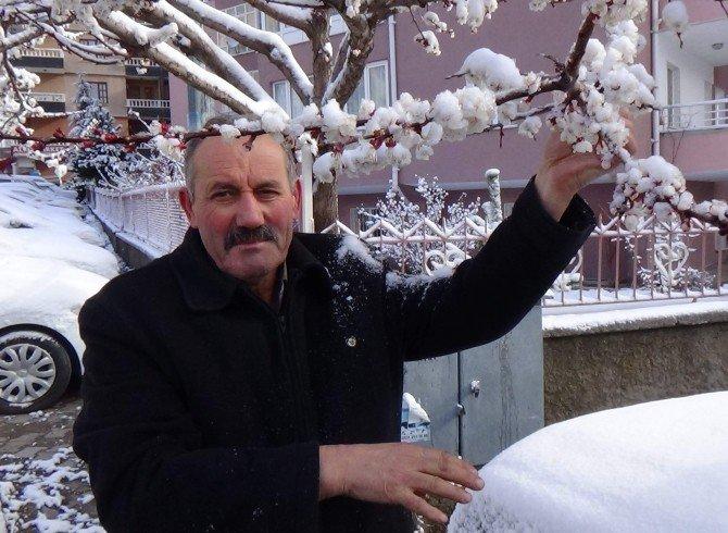 Yozgat'ta Çiçek Açan Meyve Ağaçları Kar Altında Kaldı