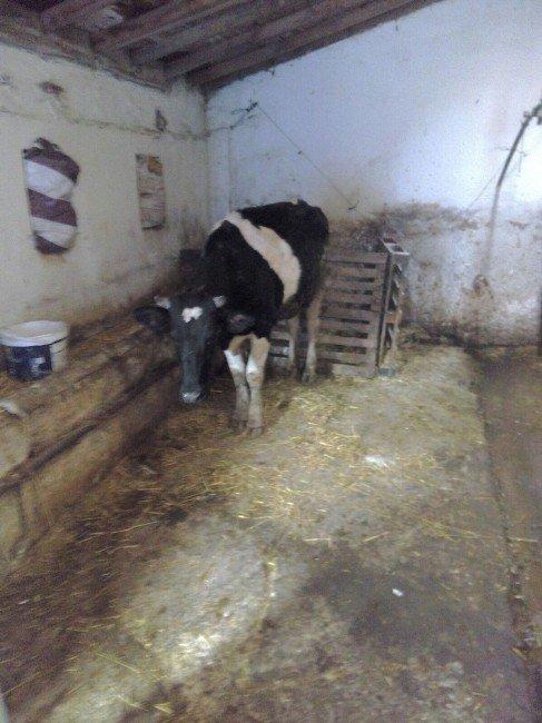 Hayvan Hırsızlarını Edirne Jandarması Yakaladı