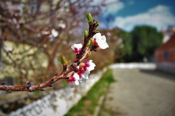 Nazilli Baharı Erken Karşıladı