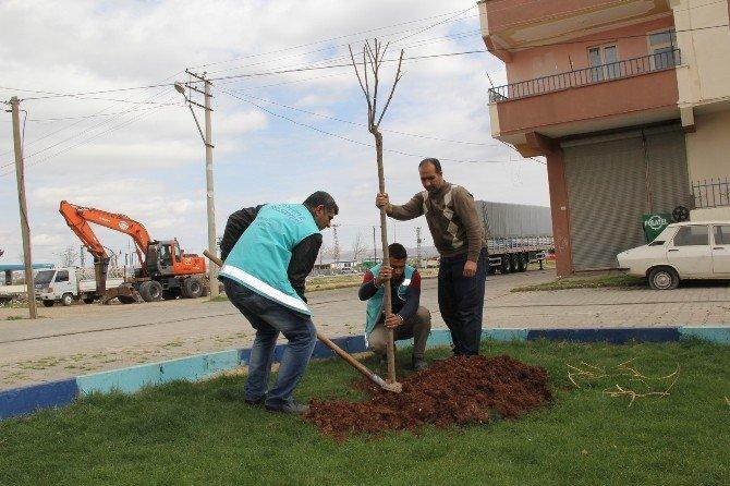 Eyyübiye Belediyesi 'Daha Yeşil Bir Eyyübiye İçin' Kolları Sıvadı