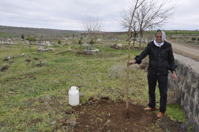 Bir Ağaç Kesen Vatandaşa 30 Ağaç Dikme Cezası Verildi