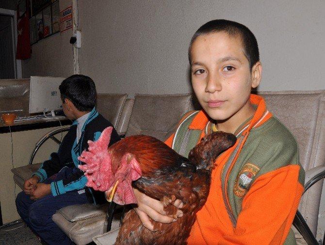 Gaziantep'te İki Kardeşin Hayvan Sevgisi
