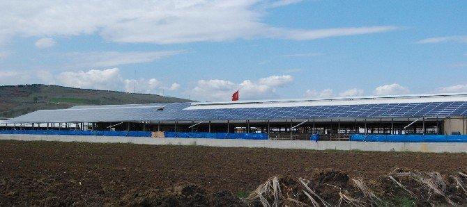 Enerji Üreten Doğa Dostu Çiftlik