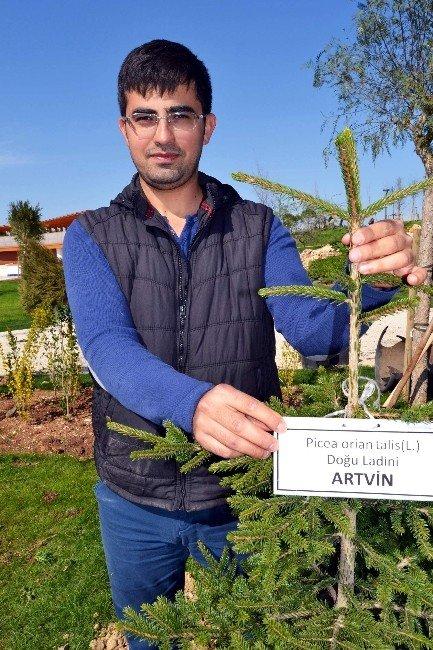 81 İlin Sembol Ağaçları Antalya'da Buluştu