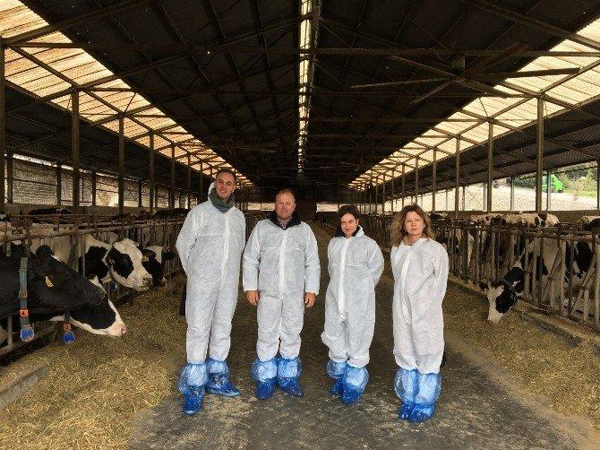 Yeni Zelanda ET Ve Süt Konusunda Türkiye İle İşbirliği Yapmak İstiyor