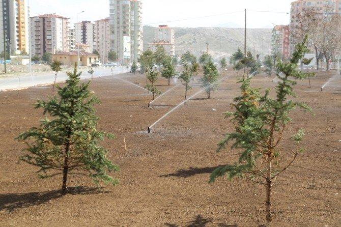 Melikgazi Belediyesi Doğaya 25 Bin Fidan Armağan Edecek