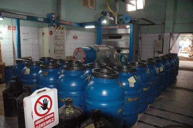 Balıkesir'de Alımların Durması Zeytinyağı Üreticisini Vurdu