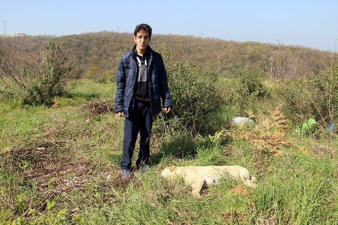 Yalova'da Hayvan Katliamı