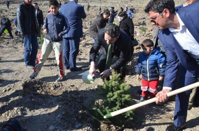 Tokat'ta Şehitler Hatıra Ormanı