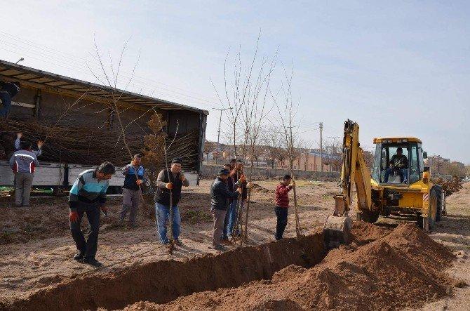 Gülşehir'de Ağaç Dikimi Ve Temizlik Çalışmaları Yapılıyor