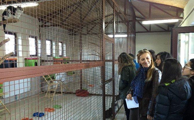 Bilkentli Öğrenciler, Hayvan Barınağı'nı Gezdi
