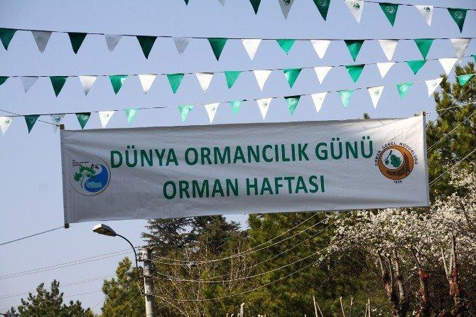Dünya Ormancılık Günü Ve Orman Haftası Kutlamaları Başladı