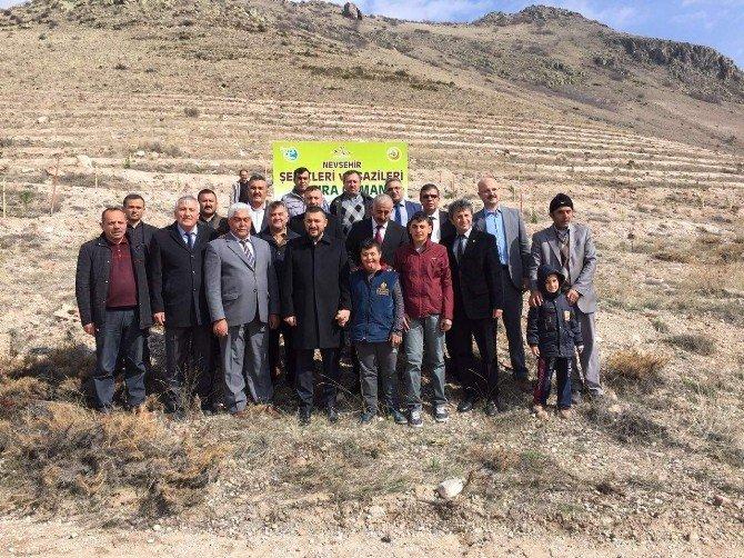 Nevşehir'de Şehitler Ve Gazileri İçin Hatıra Ormanı Oluşturuldu
