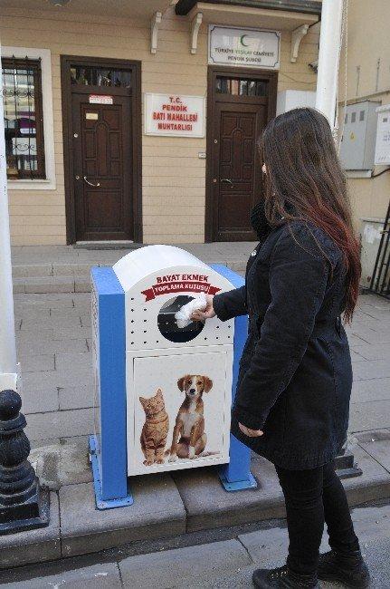 Sokak Hayvanları İçin 100 Ton Bayat Ekmek Toplandı