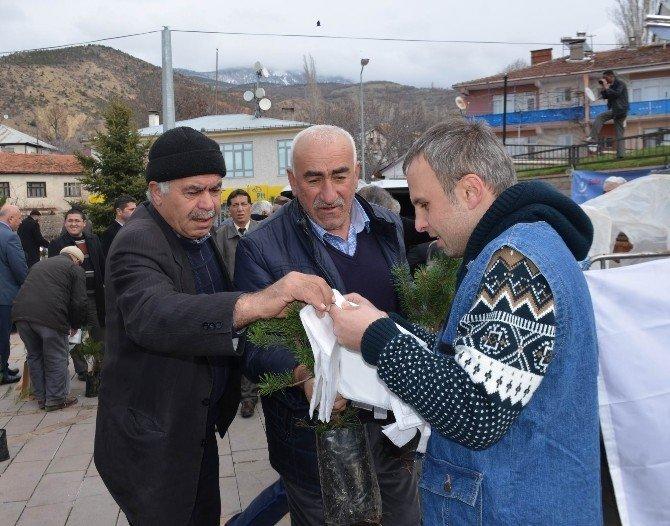 Koyulhisar'da 3 Bin Fidan Dağıtıldı