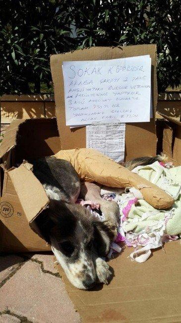 Cami Bahçesinde Toplanan Yardımlar Bu Kez 'Fındık' İçin