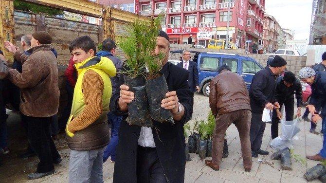Yozgat'ta 5 Bin Çam Fidanı Dağıtıldı