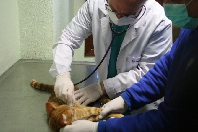 Dünyanın İlk Hayvan Hastanesinde Sokak Hayvanları Şifa Buluyor
