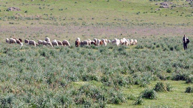 Bursalı Çiftçilerin Mera İsyanı