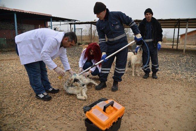 Hayvan Bakımevi Hastane Gibi Çalışıyor