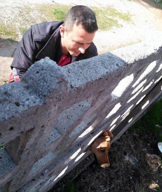 Kafası Bahçe Duvarına Sıkışan Köpeği, İtfaiye Ekipleri Kurtardı