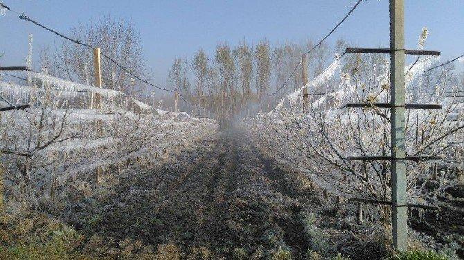 Kırağı Meyve Bahçelerini Vurdu
