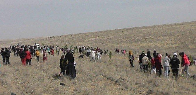 Kulu'da 2 Bin 500 Fidan Toprakla Buluşturuldu