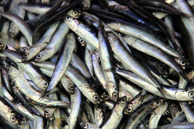 Soğuk Havalar Balık Fiyatlarını Arttırdı
