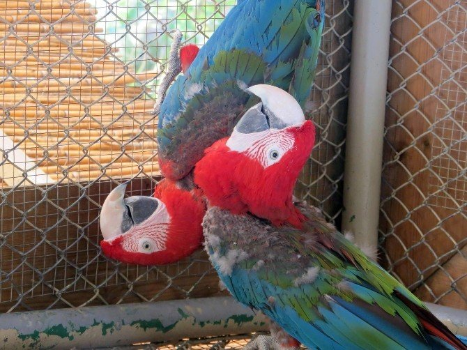 Hayvanat Bahçesi'nde Papağan Hırsızlığı