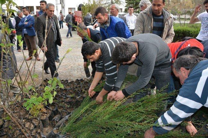 Bafra'da 2 Bin Fidan Dağıtıldı