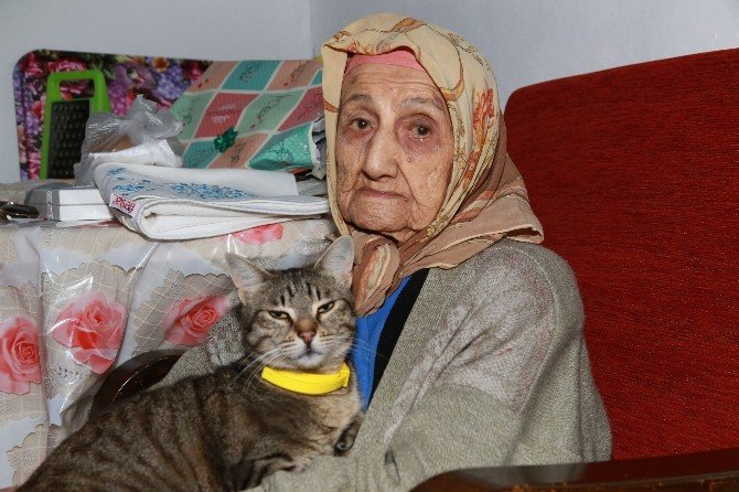 Bodrum'da Yüz Yıllık Çınarlara Ziyaret