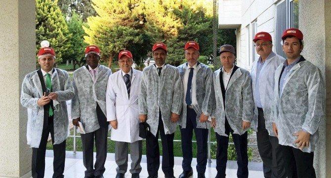 Gana Adana'dan 1 Milyon Ton Sıvı Yağ Alacak