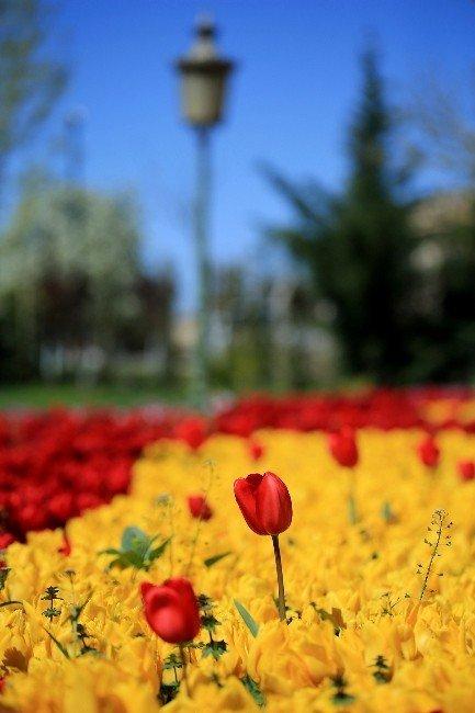 """Gaziantep'e Bahar """"Lalelerle"""" Geldi"""