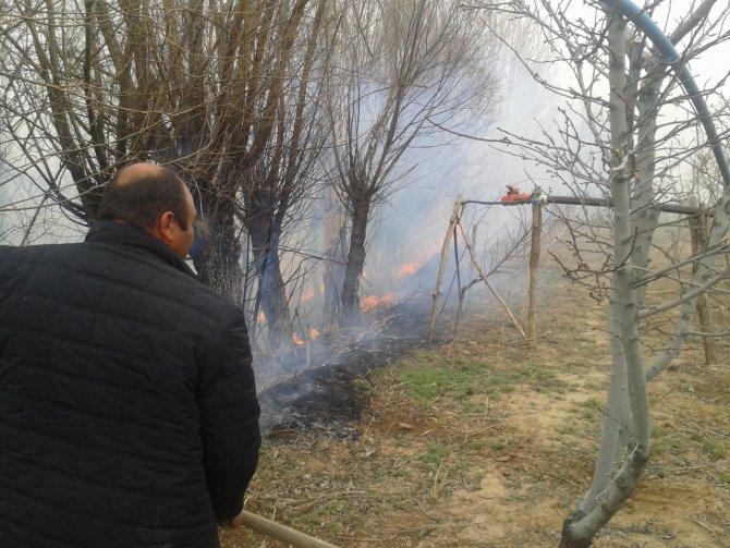 Sigara izmariti ağaçların yanmasına neden oldu