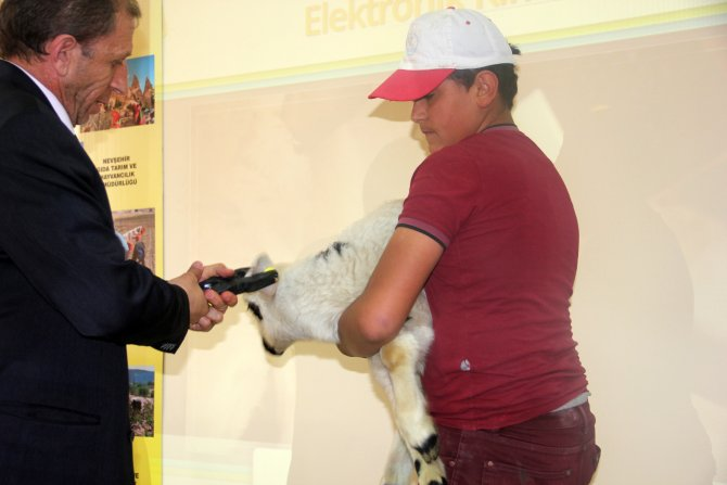 Koyun ve keçilere mikroçip takılacak