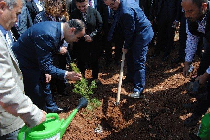 Şanlıurfa'da Ağaçlandırma Seferberliği Başlatıldı