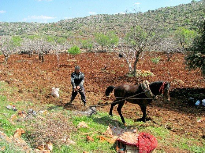 Fıstık Üreticilerinin Yardımına Karasaban Yetişiyor