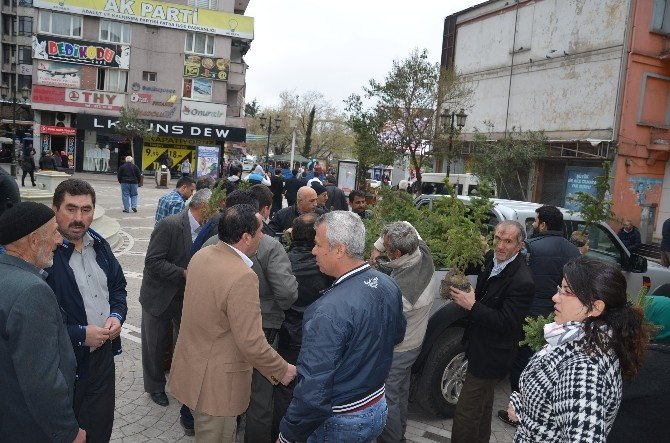 Fatsa'da 5 Bin Fidan 15 Dakika İçinde Tükendi