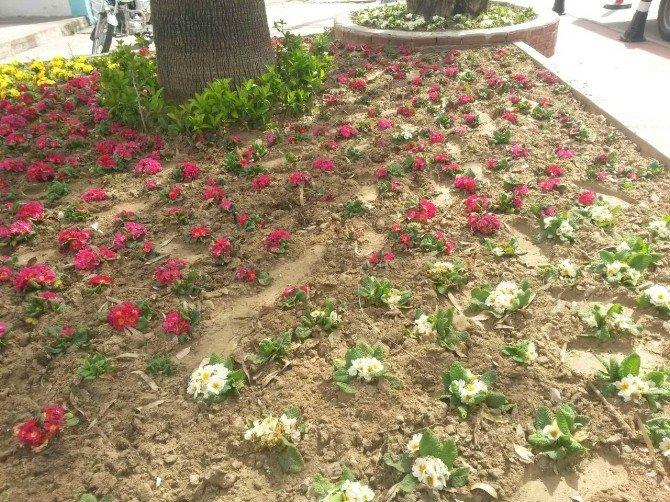 Alaşehir Belediyesi İlçeyi Rengarenk Donattı