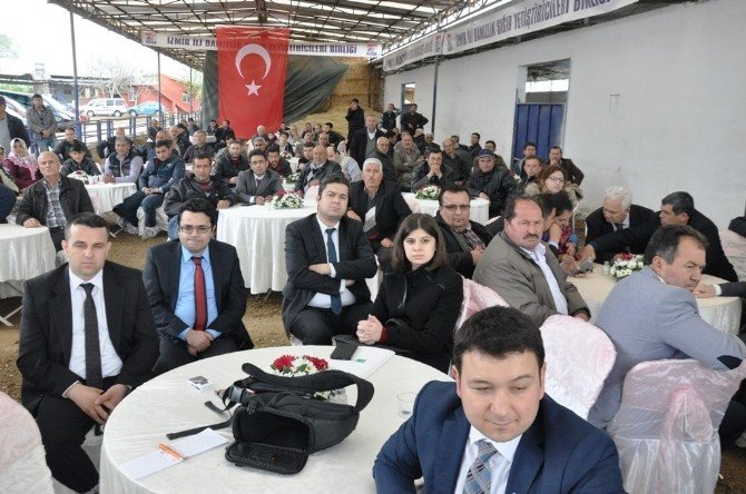 İzmir'de 2016 Yılının İlk Gebe Düve Satışı Yapıldı