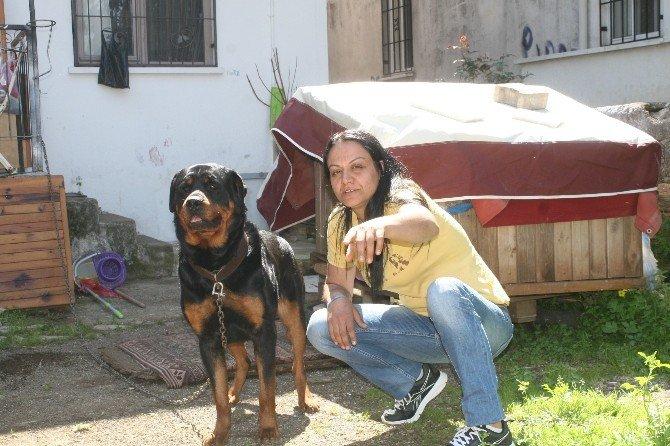 Marmaris'te Vatandaşlar Hayvanları İçin Nöbet Tutuyor