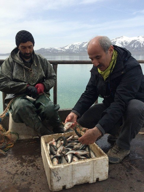 İnci Kefali Balığı Erçek Gölü'nde
