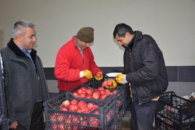 Elma Ve Armutta Hareket Başladı