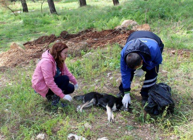 Akyaka'da Köpek İtlafı