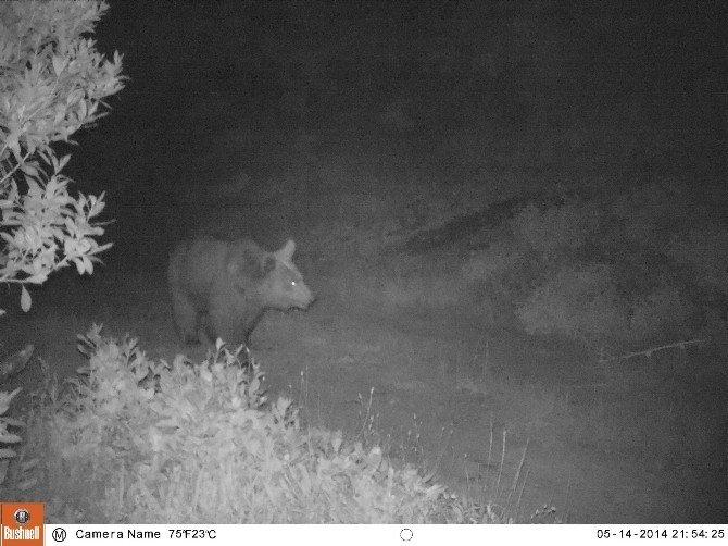 Ormandaki Vahşi Hayvanlar Kameraya Böyle Yakalandı