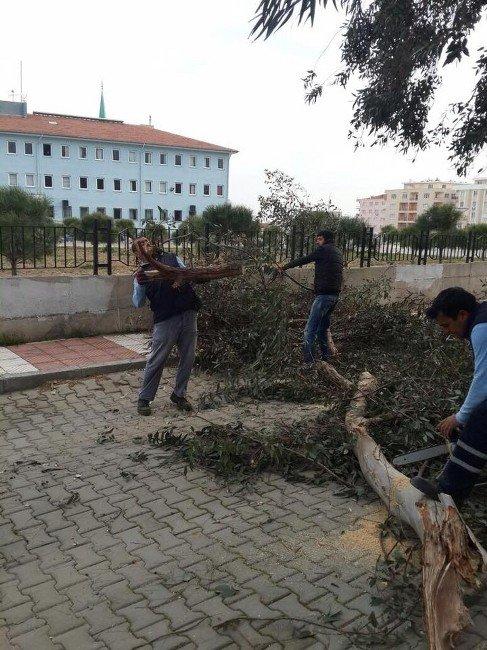Lodosun Yıktığı Ağaçlar Kaldırıldı