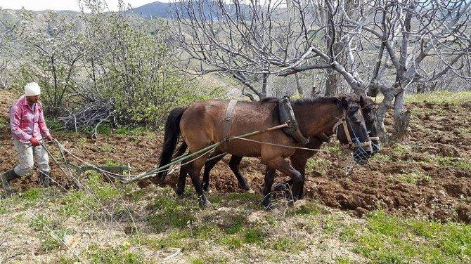 Aydın'da Bağ Ve Bahçeler Bakıma Alındı